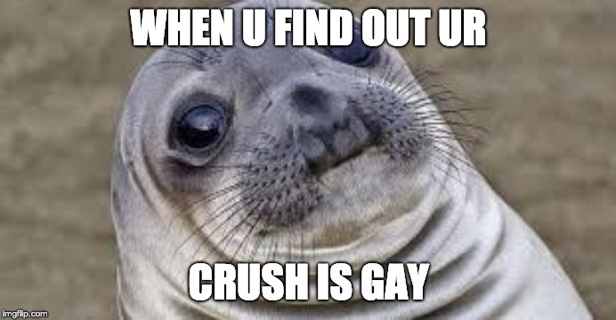 Akward moment seal | WHEN U FIND OUT UR CRUSH IS GAY | image tagged in akward moment seal | made w/ Imgflip meme maker