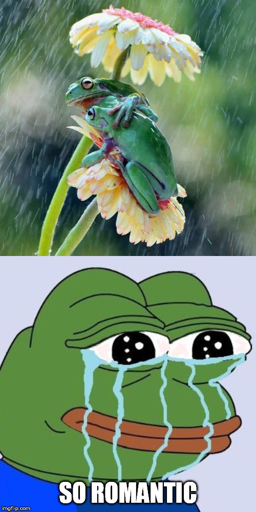SO ROMANTIC | image tagged in frogs,romantic,forever alone,pepe cry | made w/ Imgflip meme maker