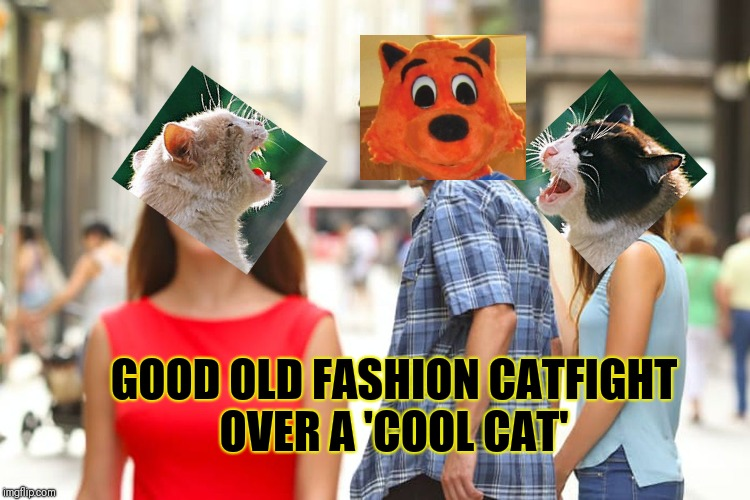 Good old fashion cat fight over a cool cat | GOOD OLD FASHION CATFIGHTOVER A 'COOL CAT' | image tagged in memes,distracted boyfriend,grumpy cat,cats,cool cat stroll,business cat | made w/ Imgflip meme maker