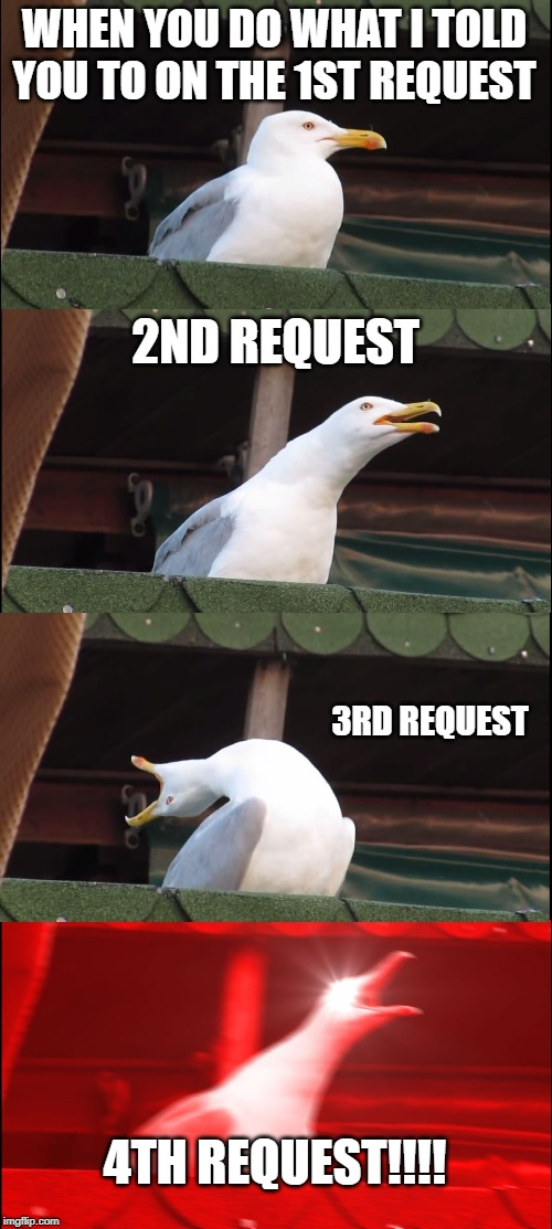 Inhaling Seagull | WHEN YOU DO WHAT I TOLD YOU TO ON THE 1ST REQUEST 2ND REQUEST 3RD REQUEST 4TH REQUEST!!!! | image tagged in memes,inhaling seagull | made w/ Imgflip meme maker