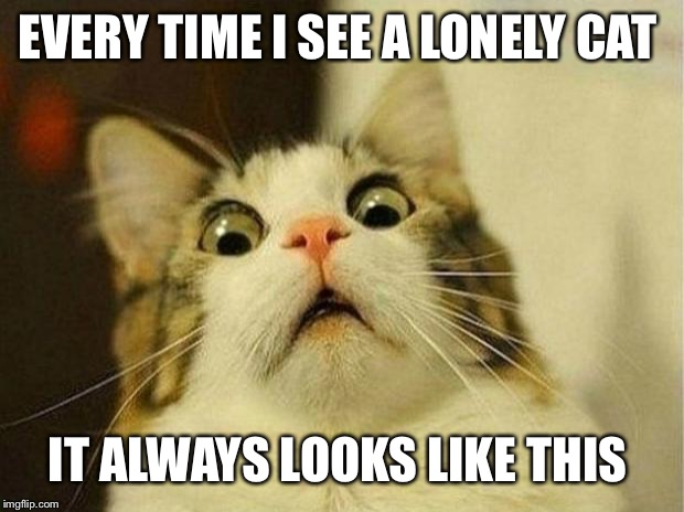 Scared Cat | EVERY TIME I SEE A LONELY CAT IT ALWAYS LOOKS LIKE THIS | image tagged in memes,scared cat | made w/ Imgflip meme maker