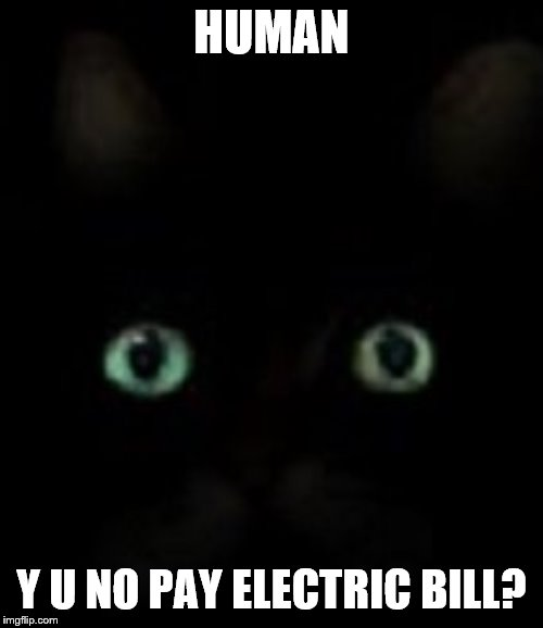 Good thing they have better night vision than people |  HUMAN; Y U NO PAY ELECTRIC BILL? | image tagged in cats,funny cats,black cat,y u no,electricity | made w/ Imgflip meme maker