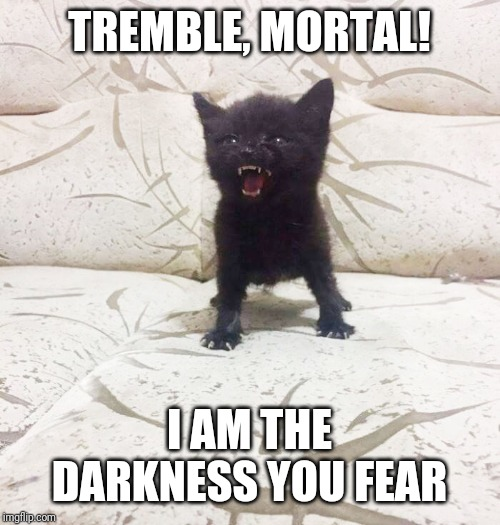 Feline Overlord | TREMBLE, MORTAL! I AM THE DARKNESS YOU FEAR | image tagged in darkness,fear me,kittens,black cat,feline,evil overlord rules | made w/ Imgflip meme maker