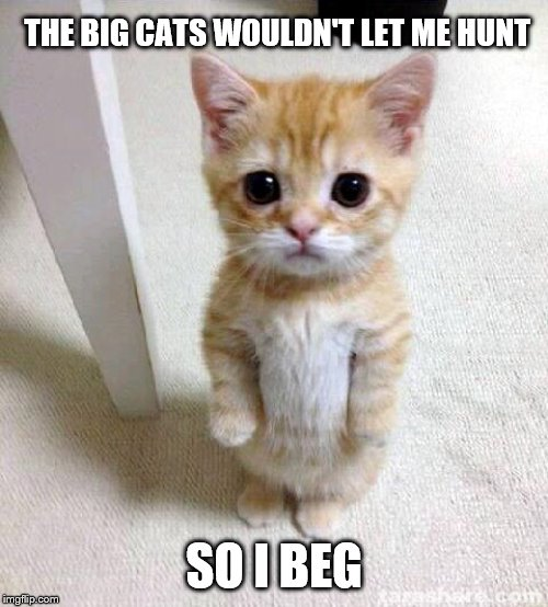 Cute Cat |  THE BIG CATS WOULDN'T LET ME HUNT; SO I BEG | image tagged in memes,cute cat,funny memes | made w/ Imgflip meme maker