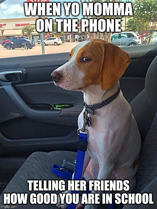 Suspicious Dog |  WHEN YO MOMMA ON THE PHONE; TELLING HER FRIENDS HOW GOOD YOU ARE IN SCHOOL | image tagged in suspicious dog | made w/ Imgflip meme maker