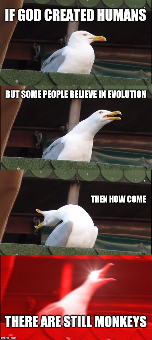 Inhaling Seagull | IF GOD CREATED HUMANS BUT SOME PEOPLE BELIEVE IN EVOLUTION THEN HOW COME THERE ARE STILL MONKEYS | image tagged in memes,inhaling seagull | made w/ Imgflip meme maker