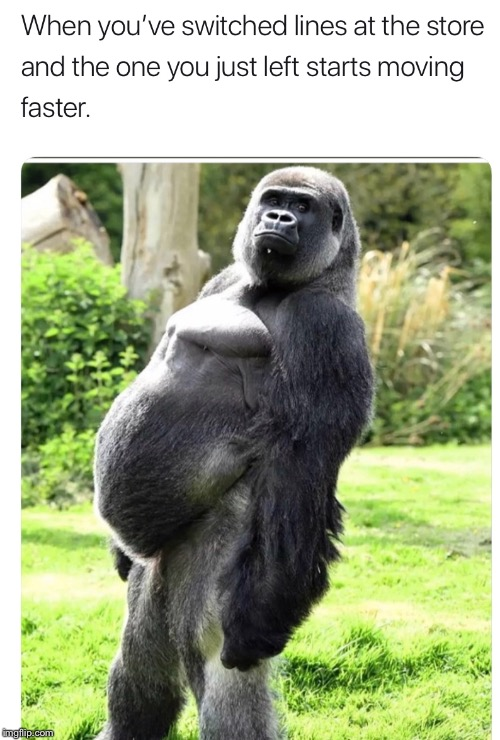 image tagged in funny,waiting,slow,gorilla | made w/ Imgflip meme maker