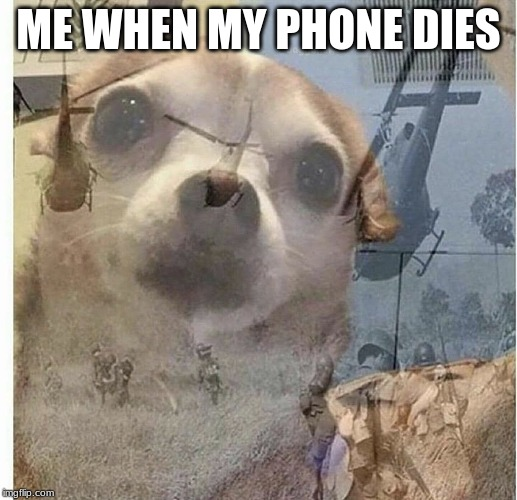 PTSD Chihuahua | ME WHEN MY PHONE DIES | image tagged in ptsd chihuahua | made w/ Imgflip meme maker
