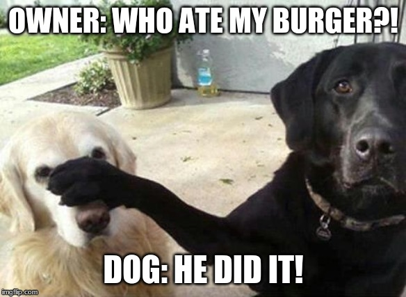 Dogs |  OWNER: WHO ATE MY BURGER?! DOG: HE DID IT! | image tagged in dogs | made w/ Imgflip meme maker