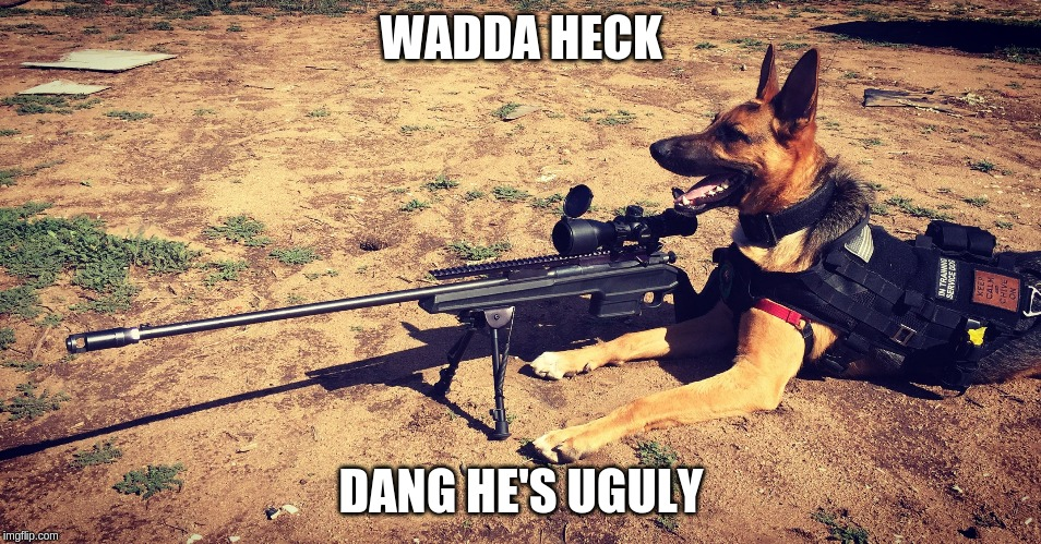 Sniper Dog | WADDA HECK DANG HE'S UGULY | image tagged in sniper dog | made w/ Imgflip meme maker