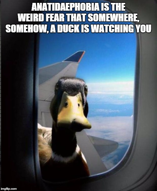 Staring duck phobia | ANATIDAEPHOBIA IS THE WEIRD FEAR THAT SOMEWHERE, SOMEHOW, A DUCK IS WATCHING YOU | image tagged in airplane,plane,duck,staring,phobia | made w/ Imgflip meme maker