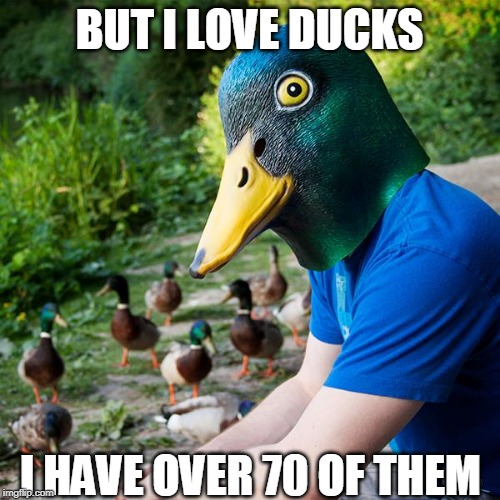 BUT I LOVE DUCKS I HAVE OVER 70 OF THEM | made w/ Imgflip meme maker
