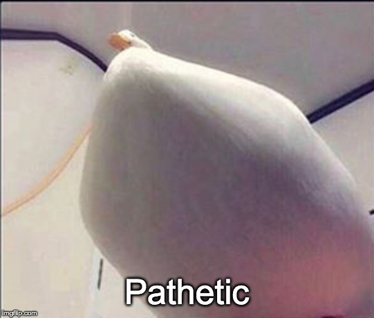 thicc ducc | Pathetic | image tagged in thicc ducc | made w/ Imgflip meme maker