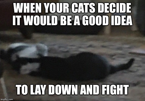 WHEN YOUR CATS DECIDE IT WOULD BE A GOOD IDEA TO LAY DOWN AND FIGHT | image tagged in funny memes,cats | made w/ Imgflip meme maker