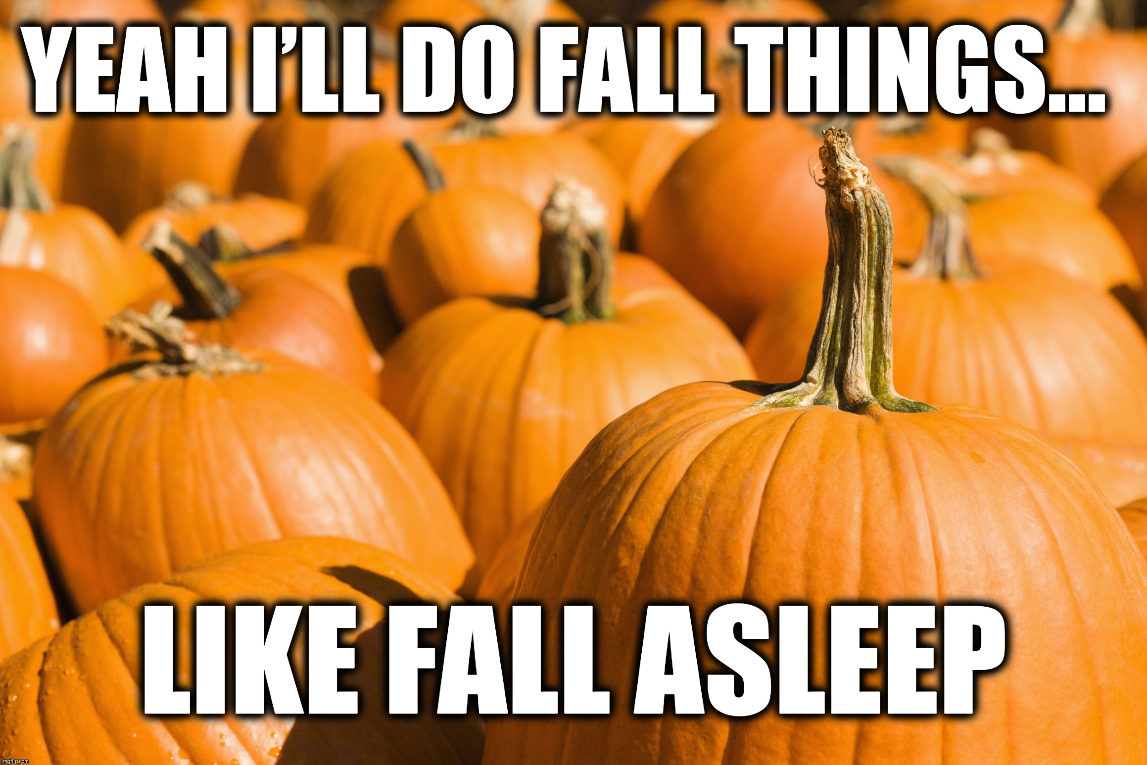 Fall things | YEAH I'LL DO FALL THINGS... LIKE FALL ASLEEP | image tagged in fall things,fall asleep,funny,memes,pumpkins,autumn | made w/ Imgflip meme maker