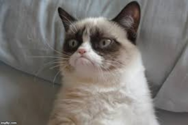 Grumpy cat | image tagged in grumpy cat | made w/ Imgflip meme maker