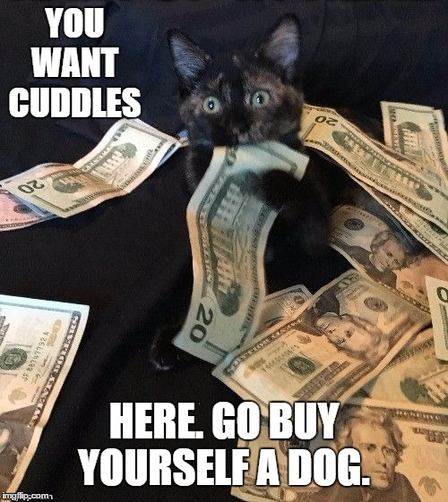 I have four cats and not one is a lap cat. |  YOU WANT CUDDLES; HERE. GO BUY YOURSELF A DOG. | image tagged in cats,cuddle,random,dog,money | made w/ Imgflip meme maker