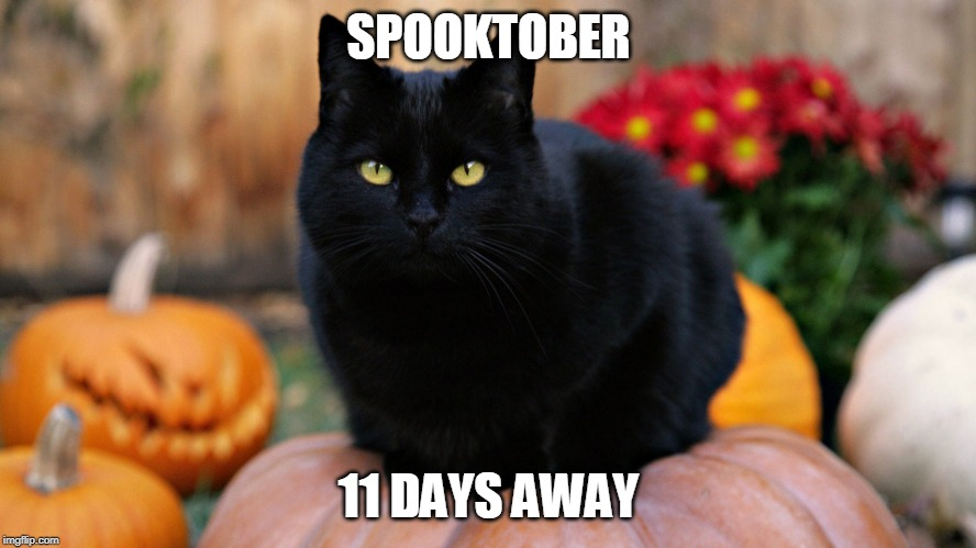 HALLOWEEN IS ALMOST HERE! | SPOOKTOBER 11 DAYS AWAY | image tagged in halloween,spooktober,cats | made w/ Imgflip meme maker