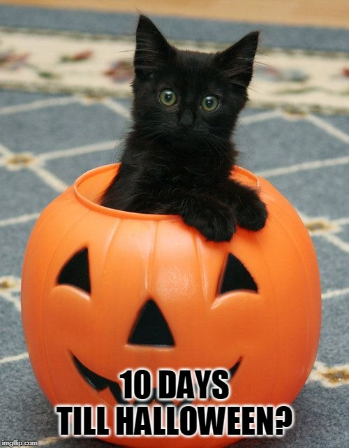 PUMPKIN CAT | 10 DAYS TILL HALLOWEEN? | image tagged in cats,spooktober | made w/ Imgflip meme maker