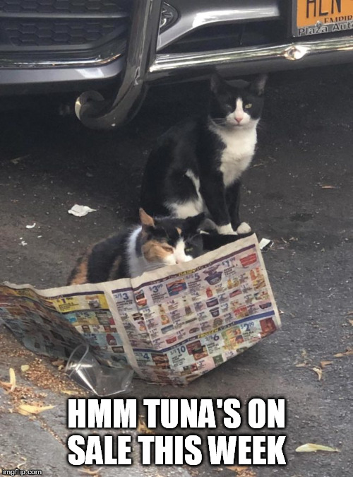 HMM TUNA'S ON SALE THIS WEEK | image tagged in tuna,sale,cat,flyer | made w/ Imgflip meme maker