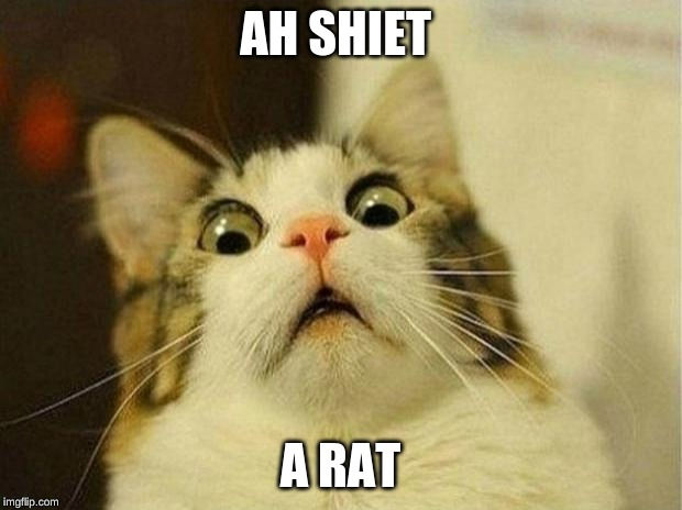 Scared Cat | AH SHIET A RAT | image tagged in memes,scared cat | made w/ Imgflip meme maker