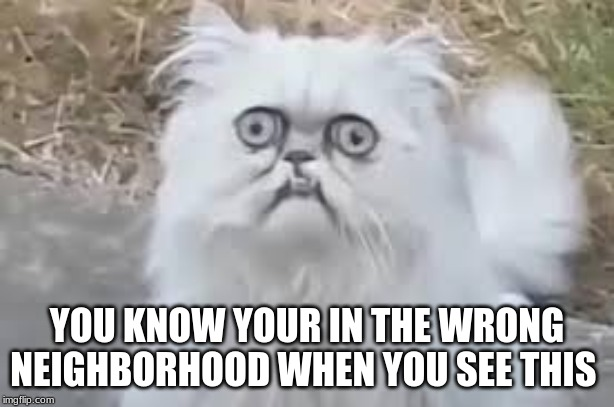 crazy cat | YOU KNOW YOUR IN THE WRONG NEIGHBORHOOD WHEN YOU SEE THIS | image tagged in crazy cat | made w/ Imgflip meme maker