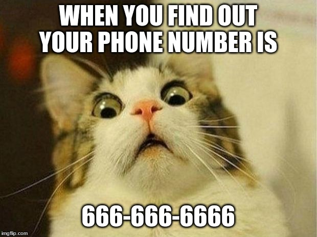 The Devil... | WHEN YOU FIND OUT YOUR PHONE NUMBER IS 666-666-6666 | image tagged in memes,scared cat,666,devil | made w/ Imgflip meme maker