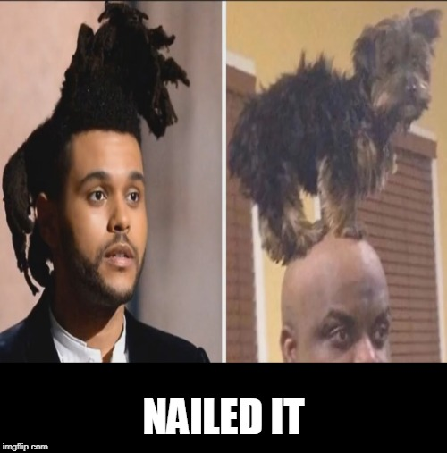 dog doo | NAILED IT | image tagged in dogs,hair,bad hair day | made w/ Imgflip meme maker