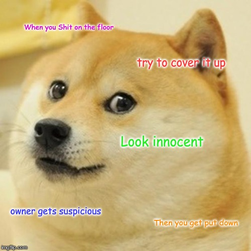 Doge | When you Shit on the floor try to cover it up Look innocent owner gets suspicious Then you get put down | image tagged in memes,doge | made w/ Imgflip meme maker