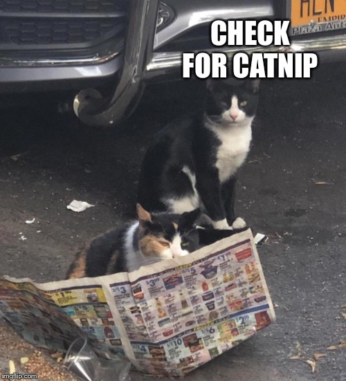 CHECK FOR CATNIP | made w/ Imgflip meme maker