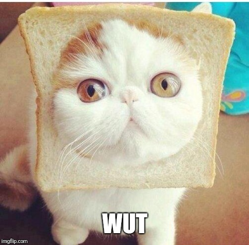 Breadcat | WUT | image tagged in breadcat | made w/ Imgflip meme maker