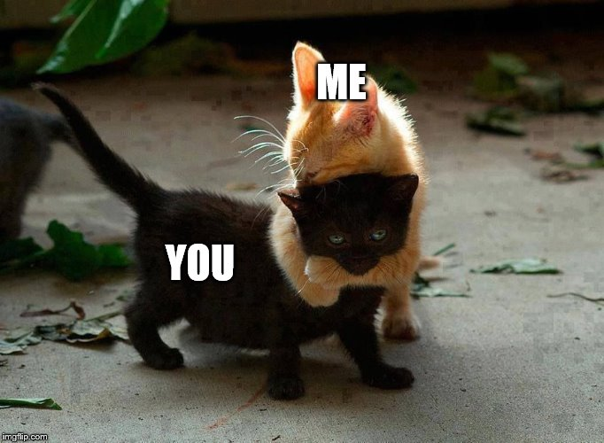 ME YOU | image tagged in kitten hug | made w/ Imgflip meme maker