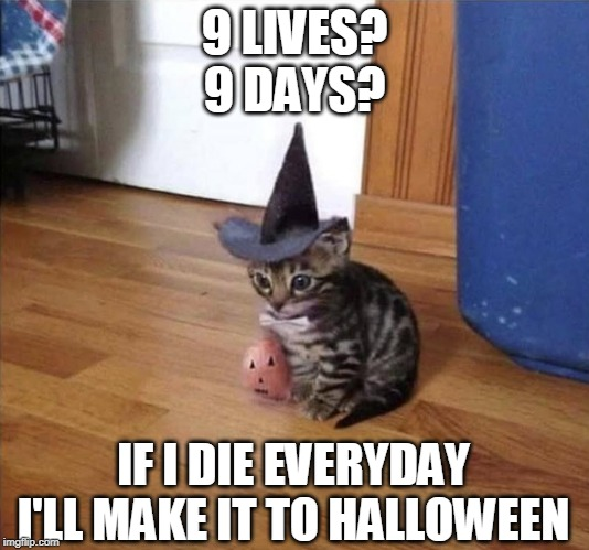 9 MORE DAYS! | 9 LIVES?9 DAYS? IF I DIE EVERYDAYI'LL MAKE IT TO HALLOWEEN | image tagged in cats,spooktober | made w/ Imgflip meme maker
