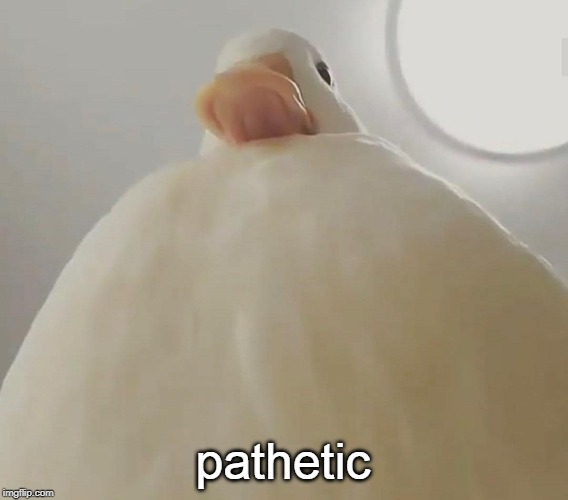 pathetic (duck#1) | pathetic | image tagged in pathetic duck1 | made w/ Imgflip meme maker