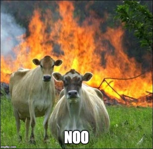 NOO | image tagged in memes,evil cows | made w/ Imgflip meme maker