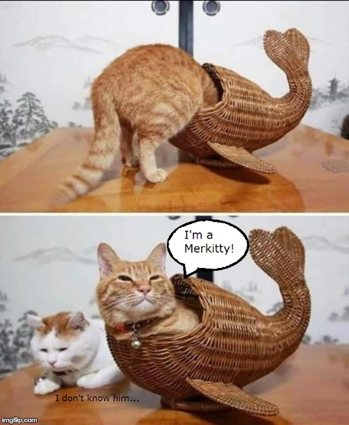 The Little MerKitty | image tagged in mermaid,cat,the little mermaid | made w/ Imgflip meme maker