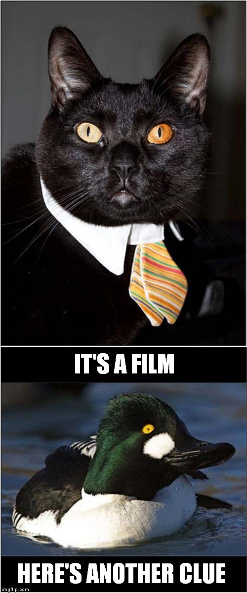 007 Charades | IT'S A FILM HERE'S ANOTHER CLUE | image tagged in fun,cats,james bond | made w/ Imgflip meme maker