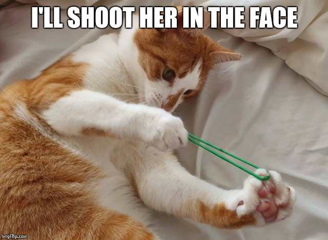 cat rubber band | I'LL SHOOT HER IN THE FACE | image tagged in cat rubber band | made w/ Imgflip meme maker