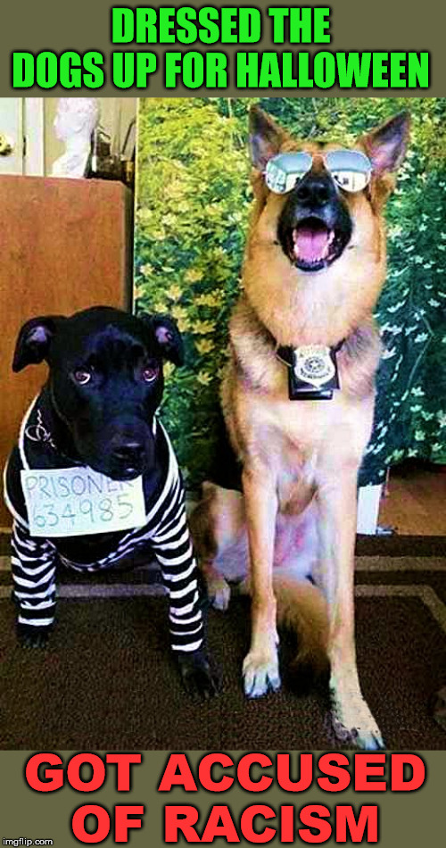 Dogs can not be racist | DRESSED THE DOGS UP FOR HALLOWEEN GOT ACCUSED OF RACISM | image tagged in dogs,racism,halloween | made w/ Imgflip meme maker
