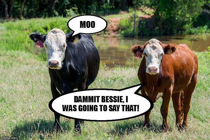 Don't have a cow, man! | MOO DAMMIT BESSIE, I WAS GOING TO SAY THAT! | image tagged in memes,fun,talking cows | made w/ Imgflip meme maker