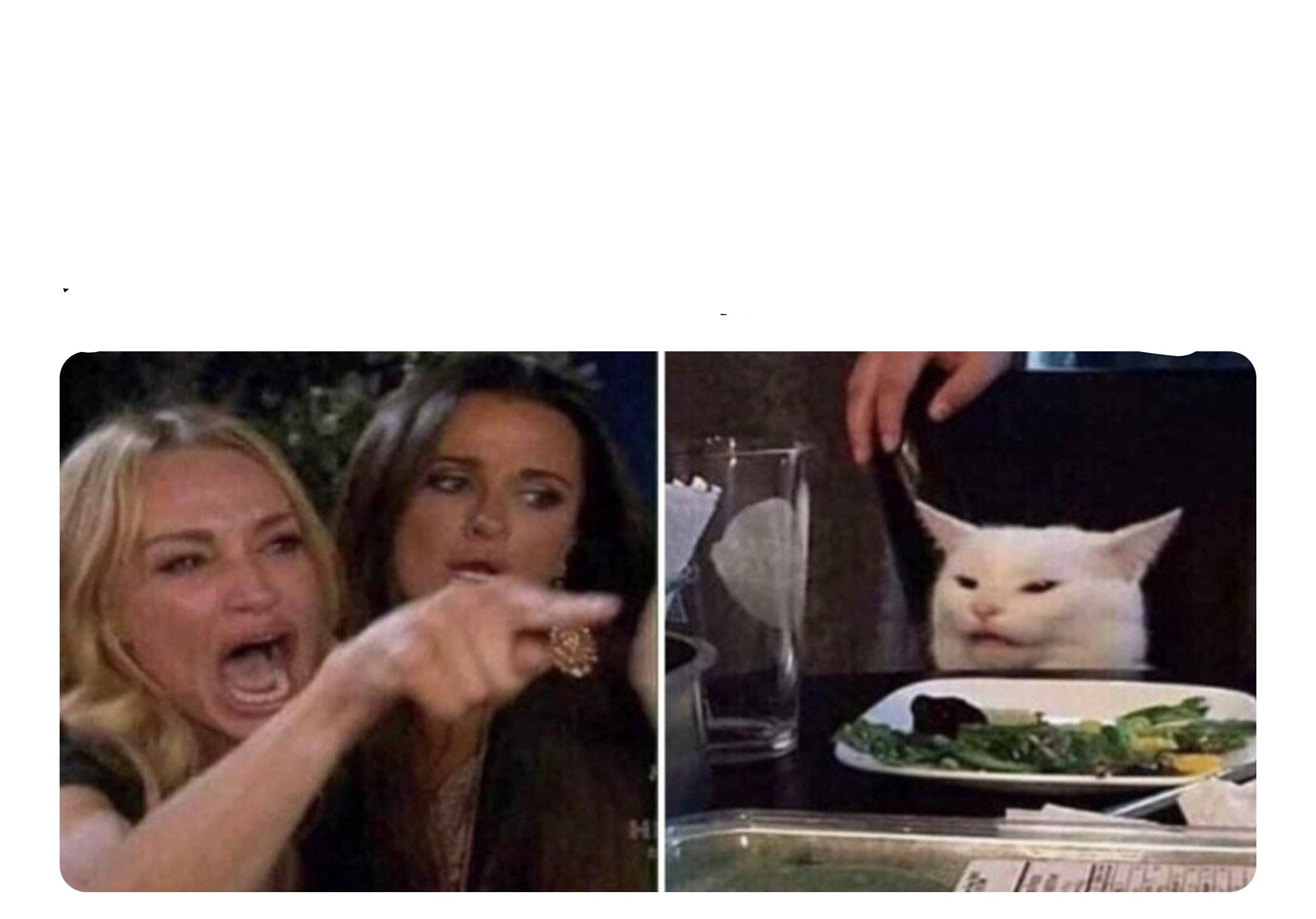Housewife cat Blank Template - Imgflip