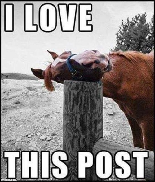 Horse Sense: Repostong this Post in Reposts | image tagged in vince vance,horses,post,reposts,funny animals,horse sense | made w/ Imgflip meme maker