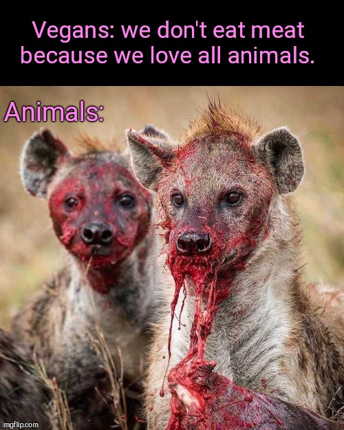 Living in a kind bubble with happy unicorns and friendly fairies | Vegans: we don't eat meat because we love all animals. Animals: | image tagged in hyenas,nature,humor,vegan logic | made w/ Imgflip meme maker