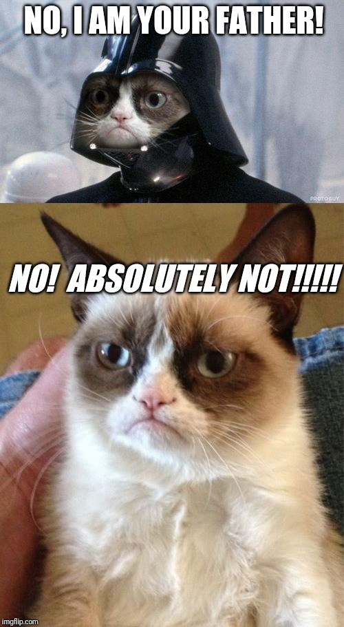 If Grumpy Cat Was In Star Wars | NO, I AM YOUR FATHER! NO! ABSOLUTELY NOT!!!!! | image tagged in memes,grumpy cat,grumpy cat star wars | made w/ Imgflip meme maker
