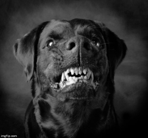 Angry black dog | image tagged in angry black dog | made w/ Imgflip meme maker
