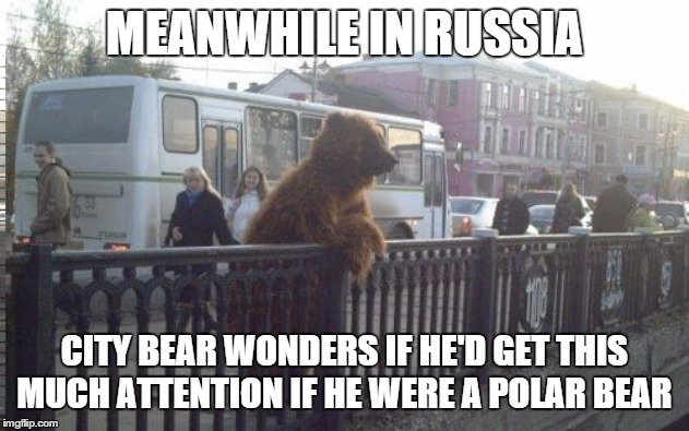 Racism for city bear |  MEANWHILE IN RUSSIA; CITY BEAR WONDERS IF HE'D GET THIS MUCH ATTENTION IF HE WERE A POLAR BEAR | image tagged in memes,city bear,racism,meanwhile in russia | made w/ Imgflip meme maker