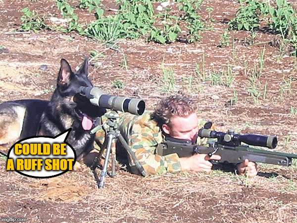 Man's best spotter |  COULD BE A RUFF SHOT | image tagged in dogs,second amendment,k9 troops | made w/ Imgflip meme maker