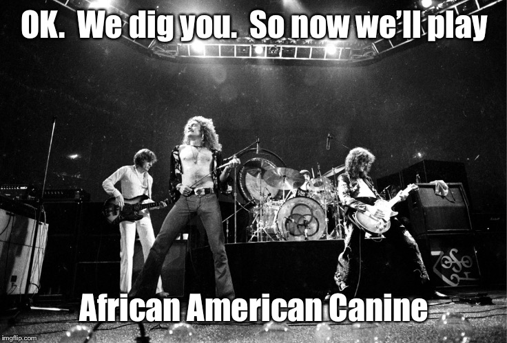 Led Zeppelin No Quarter | OK.  We dig you.  So now we'll play African American Canine | image tagged in led zeppelin no quarter | made w/ Imgflip meme maker