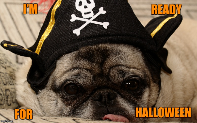 PIRATE DOGE | I'M FOR READY HALLOWEEN | image tagged in pirate,doge,dogs | made w/ Imgflip meme maker