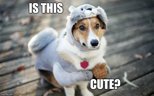 CUTE COSTUME | IS THIS CUTE? | image tagged in dogs,cute dog | made w/ Imgflip meme maker